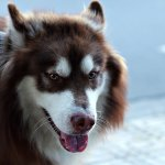 Seeing Eye Dogs and Healthy Aging