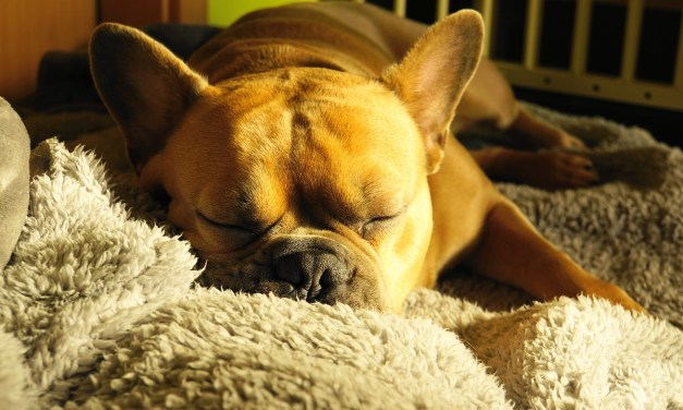 Causes of Snoring in Dogs