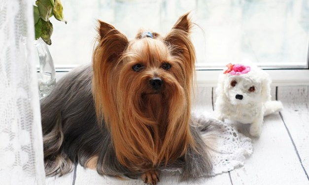 Dog Grooming – How Do You Earn Your Dog's Trust?