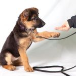 Crate Training Dogs – How to Crate Train Your Dog