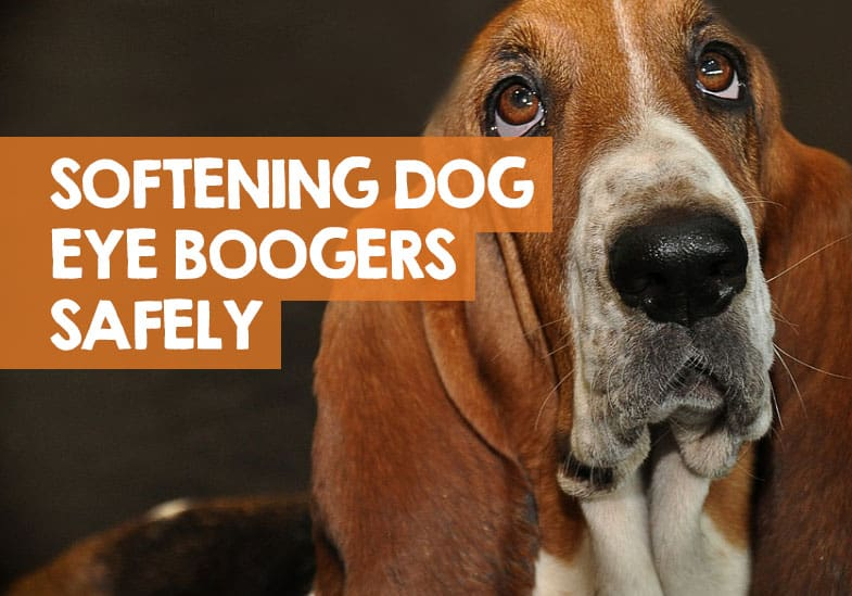 How To Soften Dog Eye Boogers 2 Safe