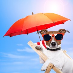 How Do You Cane A Chair Office Makeover Summer Time – Groom Your Pet!   Doggy Bakery