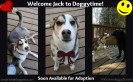 Jack is a 1 year old husky/border collie boy. UTD on vaccines and recently neutered. House and crate trained. Very social with other dogs and people but has prey drive for cats. Very active, needs lots of physical and mental stimulation! Ideal for someone with an existing fun-loving dog already in the home!