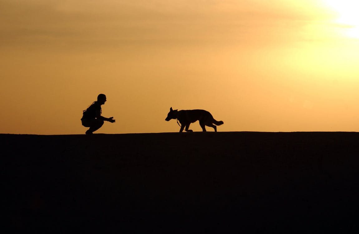 Types Of Certifications For Dog Training Doggy Training Guide