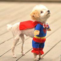 Funny Halloween Dog Costumes  Dog Humor