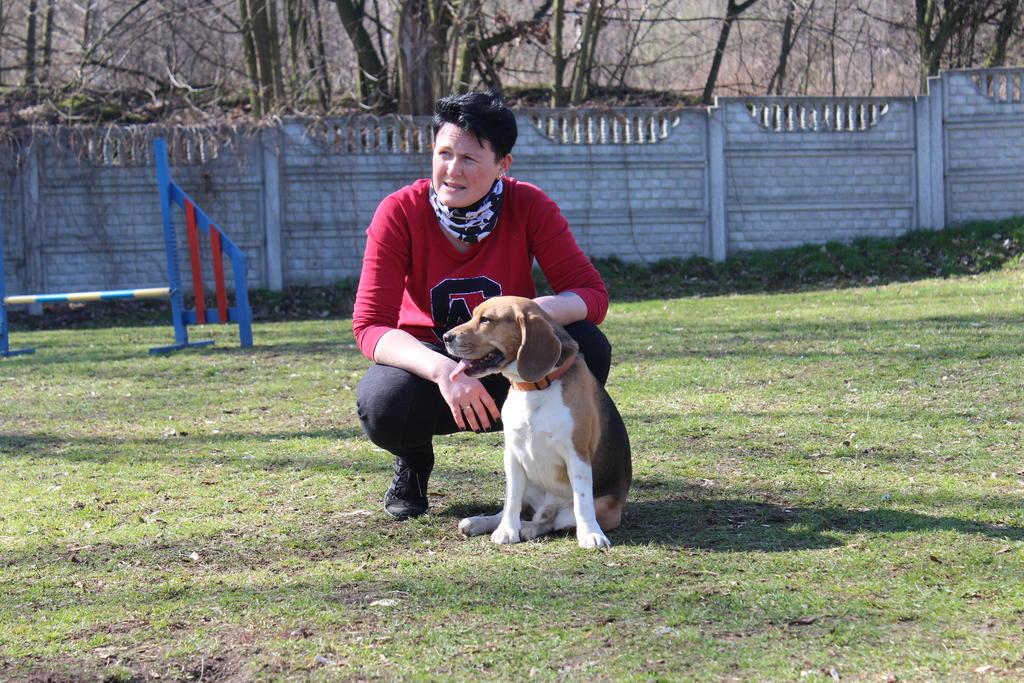 agility-beagle roki i patrycja