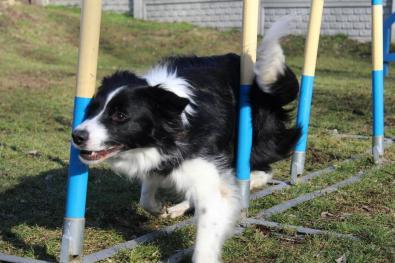 agility-slalom