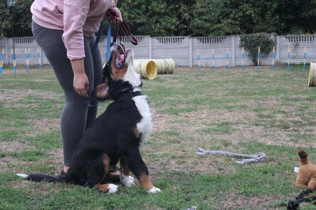 przedszkole-dla-szczeniat-bernenski-pies-pasterski