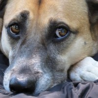 A Campaign for the Sweetest Dog in the World