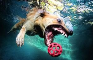 Dogs Underwater Stills 3