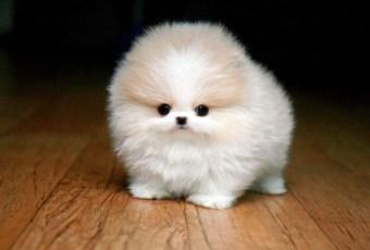 Top 10 Cute Dog Breeds List