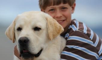 English Labrador Dog Photos