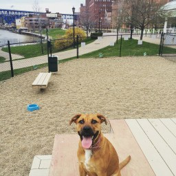 dog friendly downtown cleveland dog park 2