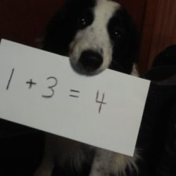 Study shows Dogs can Count