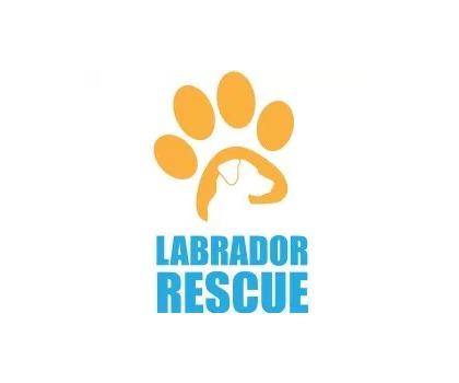 Volunteer Rescue Dogs Sydney
