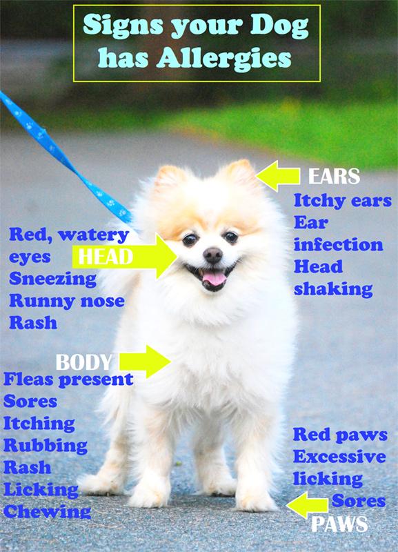 Dog Allergies - Does My Dog Have Seasonal Allergies?