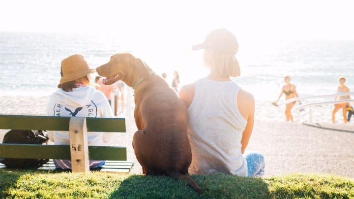 Relación con tu perro3_dogminancia