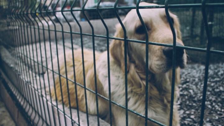 dogminancia_ansiedad por separación 2