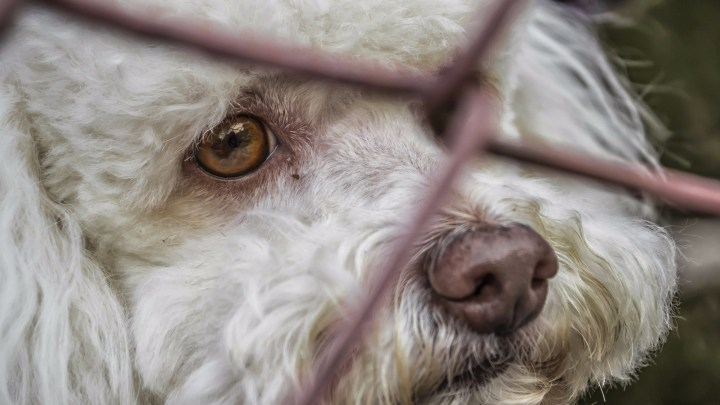 dogminancia perros abandonados 3