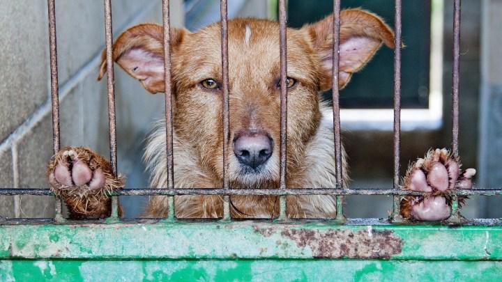 dogminancia_perros abandonados