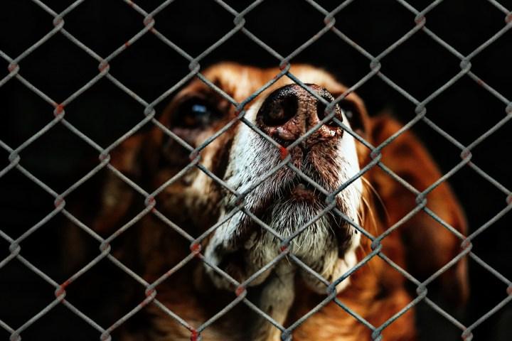 Abeto_no compra perro navidad_dogminancia