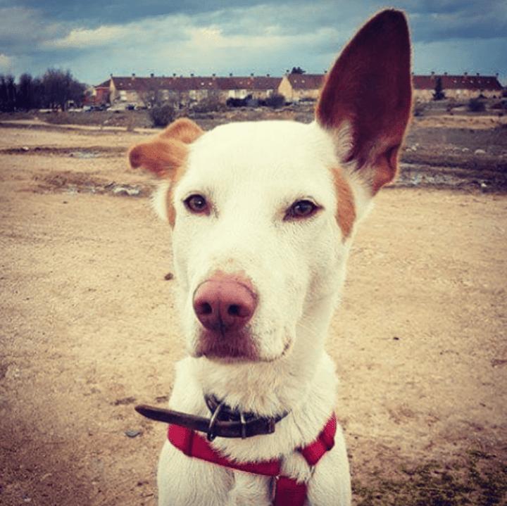 dogminancia_capturar comportamientos perro