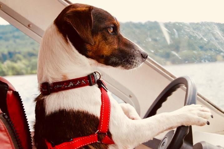dogminancia-speaky el perro al que solo le faltaba hablar
