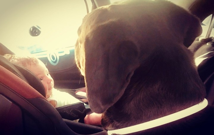 dogminancia-relación perros y niños
