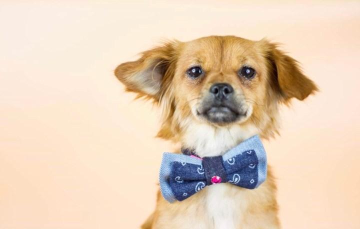 Ignorar al perro-dogminancia