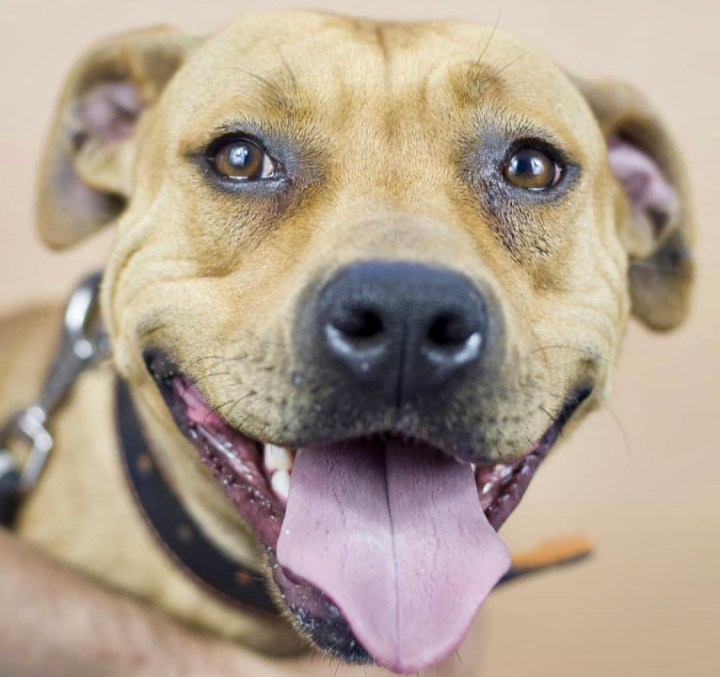 Educación canina o humana-perros-dogminancia