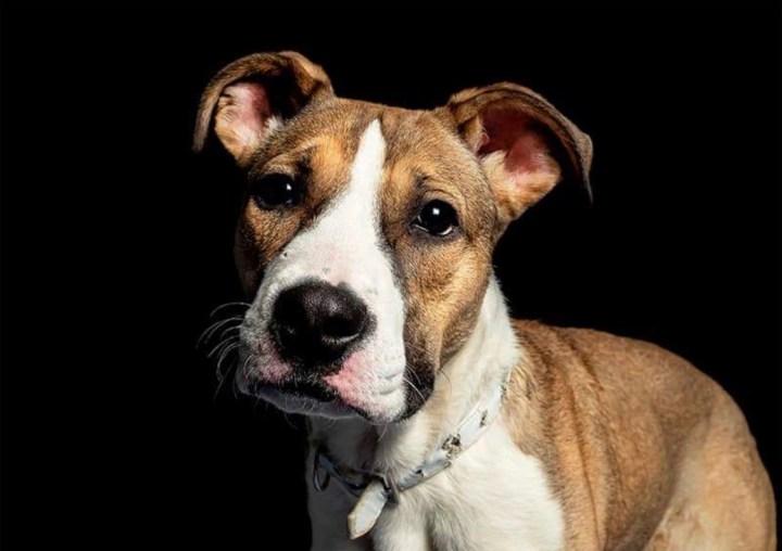 luchar con perro-dogminancia