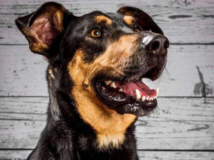 La verdadera clave de la relación con tu perro