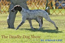 Dog show cover copy