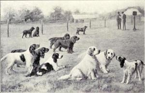 Group_of_Gun_Dogs_from_1915
