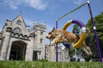 Image of dog in agility competition