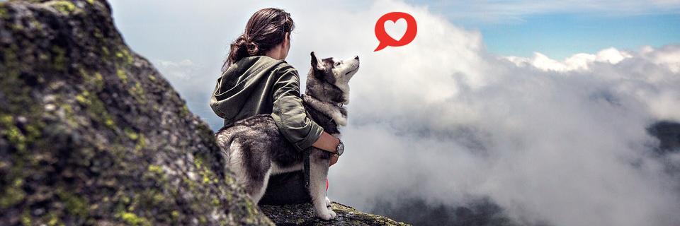 avkopplande dating app doggy stil nära lund