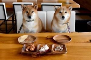 決して与えてはいけない。犬が食べられない危険な食べ物