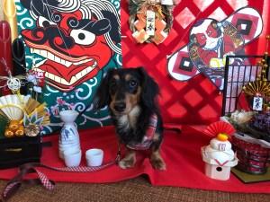 犬と泊まれる宿犬御殿