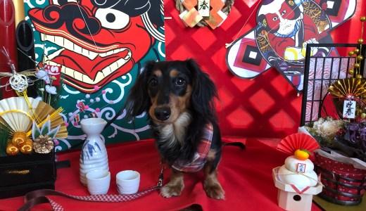 【ペットと宿泊実体験】関西のペットも泊まれる宿「犬御殿」レビュー