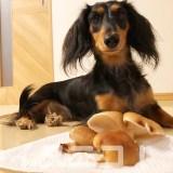 【保存版】犬はしいたけを食べても大丈夫。栄養豊富です【生はNG】