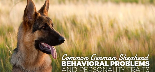 http://ordr0105.doggyd4n.hop.clickbank.net/?rd=german-shepherd-dog-training