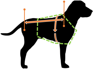 dog-measurment-guide-picture