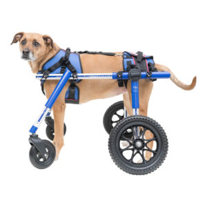 wheel chairs for dogs ergonomic chair sale dog wheelchair of 2019 products handicapped disabled pets doggie