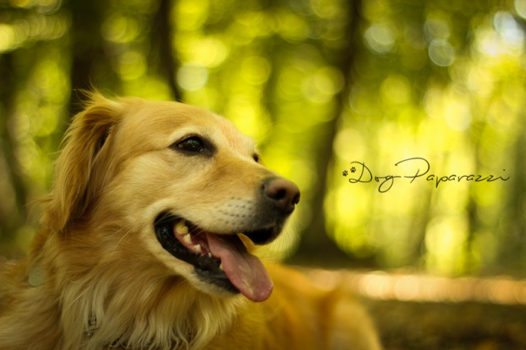 Dogpaparazzi.com ● Professional DOG Photography ● Bergen, NORWAY ● Outdoor photo session - Pet photo shoot