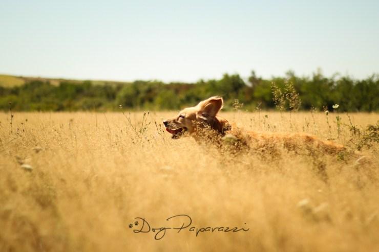 Dogpaparazzi.com ● Professional DOG Photography ● Bergen, NORWAY ● Outdoor photo session - Dog photoshoot