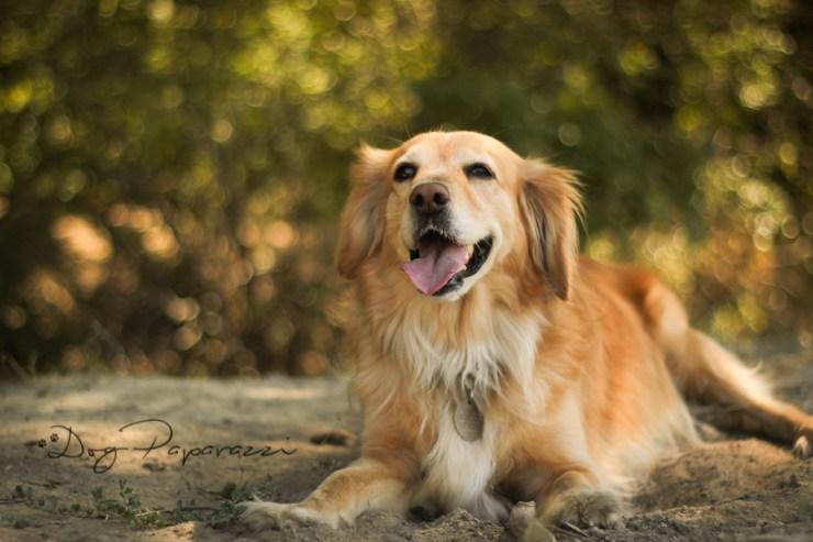 Dogpaparazzi.com ● Professional DOG Photography ● Bergen, NORWAY ● Outdoor photo session - Pet photoshoot