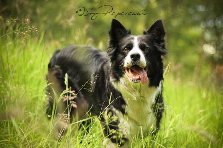 Dog_Paparazzi_Kila_2