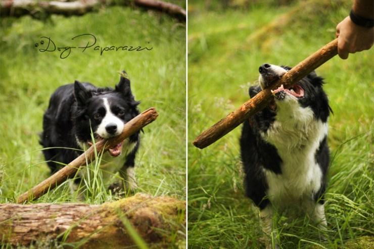 Dog_Paparazzi_Kila_12