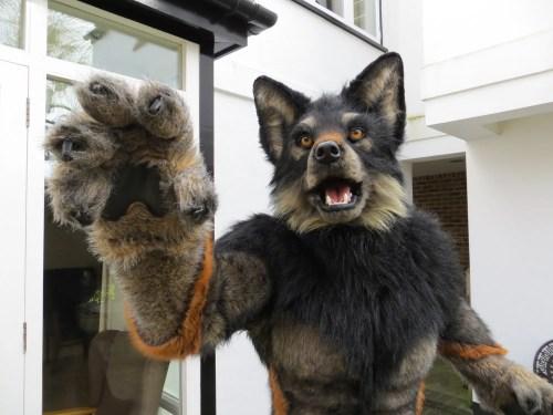 wolf 08-03-2014 005 smaller