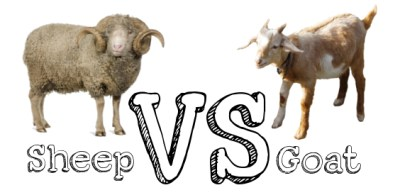 Sheep-Vs-Goat
